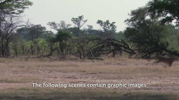 Caught in the Act Lion Brawl (2012) download