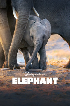 Elephant (2020) download