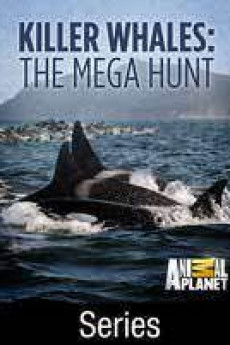 Killer Whales: The Mega Hunt (2016) download
