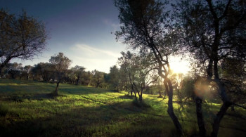 Love Under the Olive Tree (2020) download