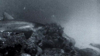 Playing with Sharks: The Valerie Taylor Story (2021) download