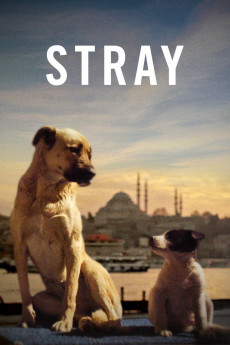 Stray (2020) download