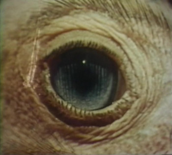 The Searching Eye (1964) download