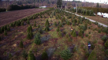 The Tree That Saved Christmas (2014) download