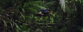 Woman in the Woods (2020) download