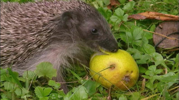 Year of the Hedgehog (2009) download